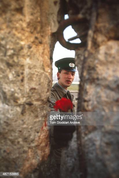 An East German border guard offers a flower through a gap in the Berlin Wall on the morning of November 10th 1989 when it fell