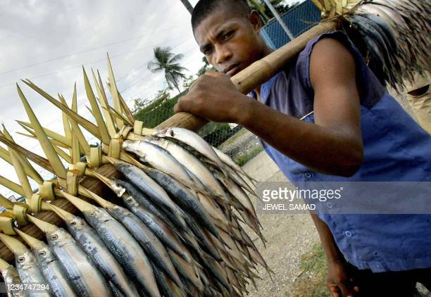 An East Timorese fisherman carries a load of his fresh catch to a market for sale in Dili, 12 April 2006. Fishing is one of the main occupations in...