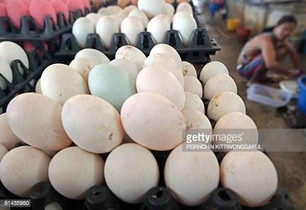 An egg vendor sits next to duck eggs at a local market in Bangkok 07 October 2004 The Thai Government will buy as many as five million duck and geese...