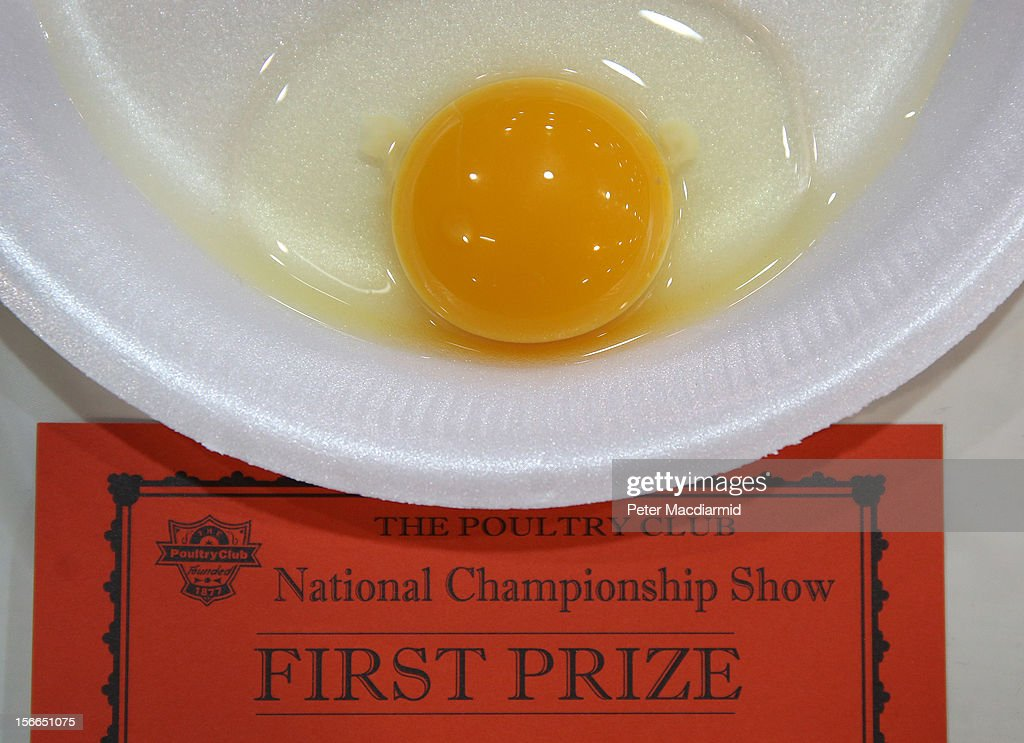 An egg wins first prize in the egg competition at The National Poultry Show on November 17, 2012 in Stoneleigh, England.Thousands of people have attended The Poultry Club's 2012 National Show. The Poultry Club was founded 1877, and was established to safeguard the interests of all pure and traditional breeds of poultry including chickens, ducks, geese and turkeys.