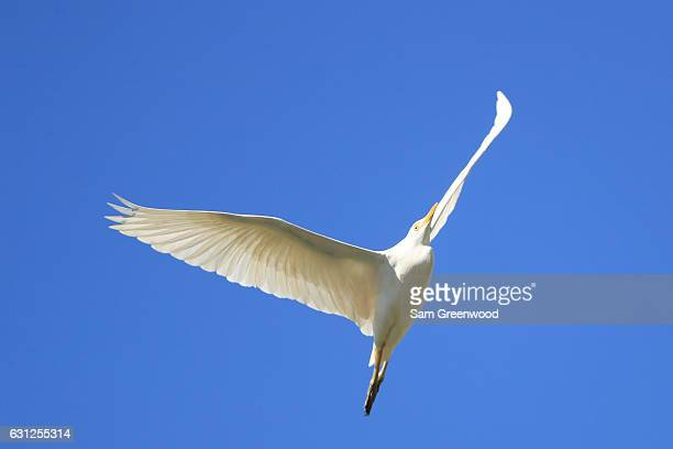 An egret flies during the final round of the SBS Tournament of Champions at the Plantation Course at Kapalua Golf Club on January 8, 2017 in Lahaina,...