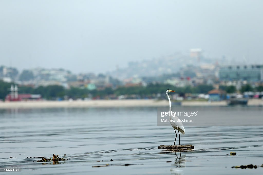 An egret floats among pollution in Guanabara Bay, site of sailing events for the Rio 2016 Olympic Games, on July 29, 2015 in Rio de Janeiro, Brazil. The Rio government promised to clean 80 percent of pollution and waste from the bay in time for the games but admits that goal now is unlikely to be reached. August 5 marks the one-year mark to the start of the Rio 2016 Olympic Games.