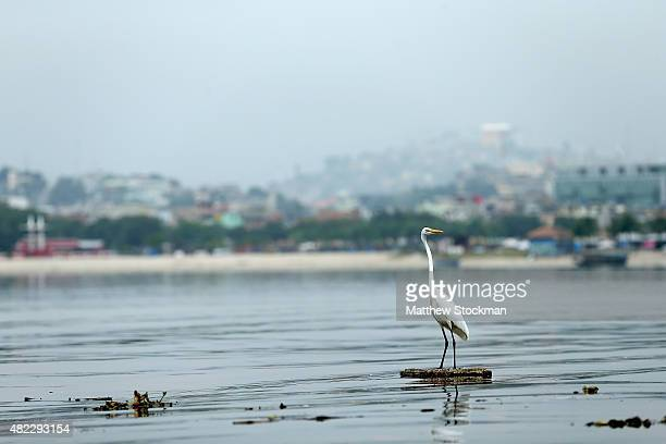An egret floats among pollution in Guanabara Bay site of sailing events for the Rio 2016 Olympic Games on July 29 2015 in Rio de Janeiro Brazil The...
