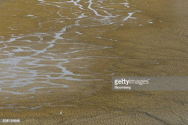 An egret stands on cracked earth at the bottom of the dried-up Manjara Dam near Latur, Maharashtra, India, on Saturday, April 16, 2016. Hundreds of...