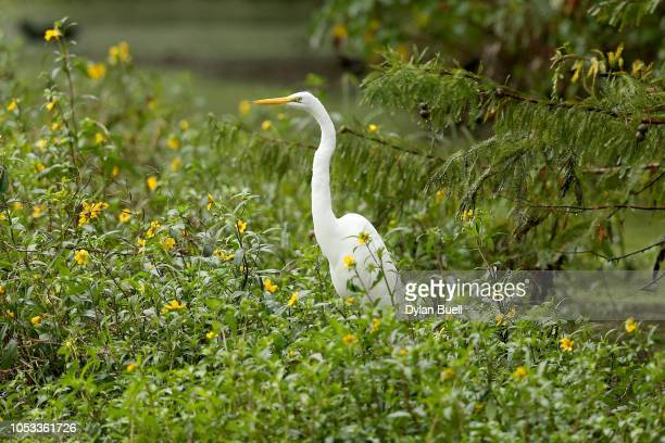 An egret wades in the water near the 17th fairway during Sanderson Farms Championship Round One on October 25 2018 in Jackson Mississippi