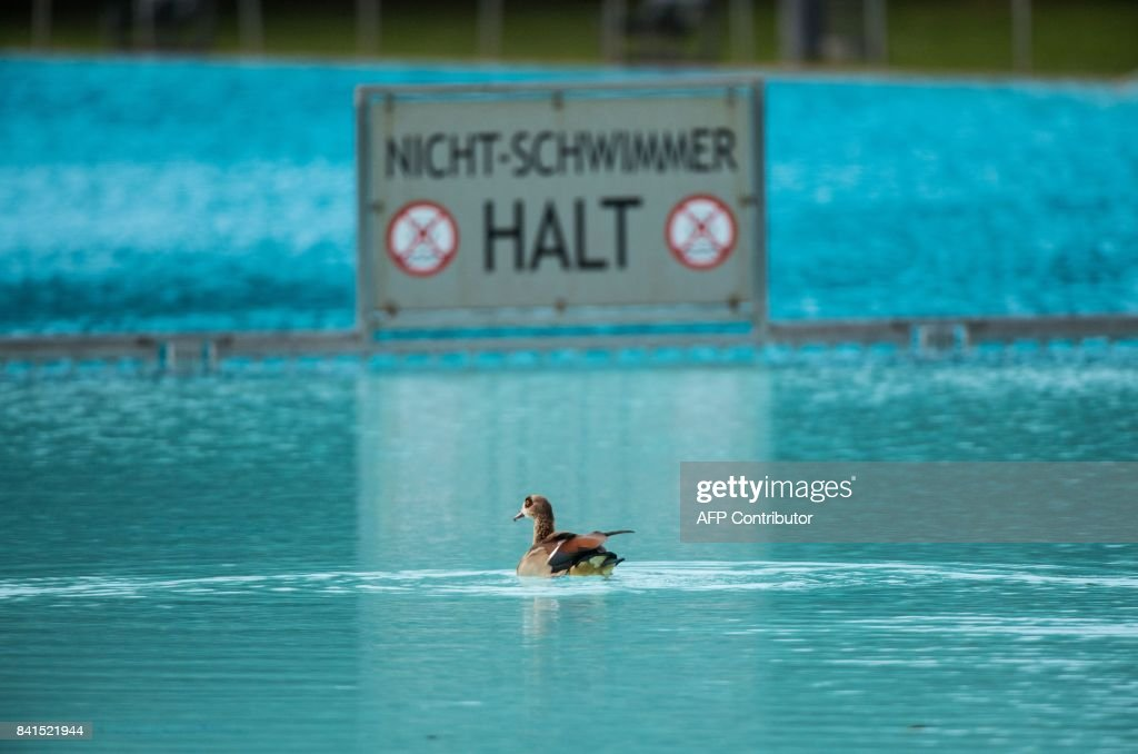 Pool Frankfurt an goose swims past a sign reading non swimmers stop in