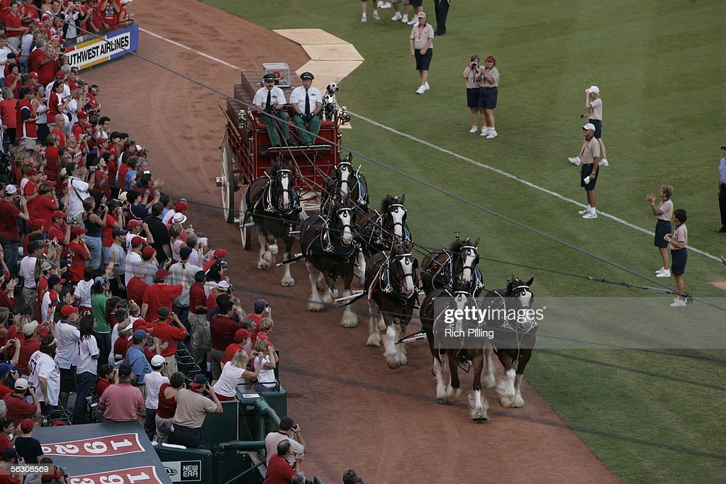 An eight-horse Budweiser Clydesdale hitch rides onto the field after the final regular season game at Busch Stadium on October 2, 2005 in St. Louis, Missouri. Following the season, Busch Stadium will be torn down to make room for a new stadium. The Cards defeated the Reds 7-5.