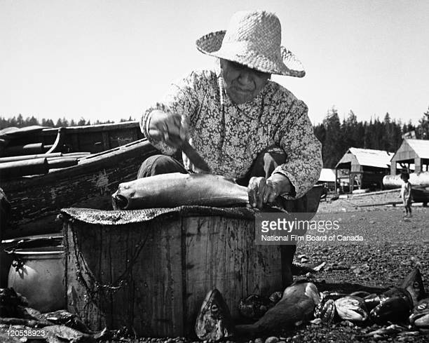 An elderly First Nations woman is gutting fish on the banks of the Skeena River Northern British Columbia Canada 1949 Photo taken during the National...