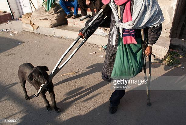 An elderly handicapped Indian Muslim beggar Noor Mohammed aged 70 pats a stray dog with his crutch on October 30 2012 in Srinagar the summer capital...
