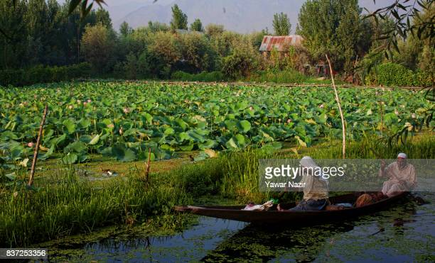 An elderly Kashmiri Muslim couple row their boat in front the floating lotus garden in Dal lake on August 22 2017 in Srinagar the summer capital of...