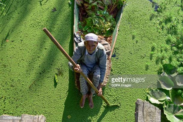 An elderly man can be seen rowing his boat through the interiors of Dal Lake in Srinagar Indian administered Kashmir Kashmir is the northernmost...