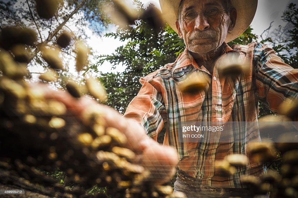 NICARAGUA-ENVIRONMENT-COFFEE-BIOGAS : News Photo