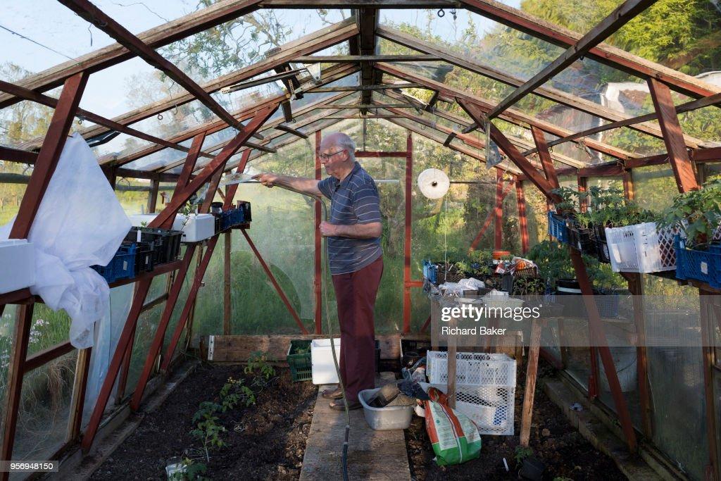 Elderly Man Waters Plants In Greenhouse : News Photo