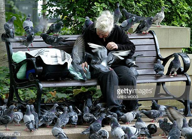 An elderly woman feeds pigeons in Sydney's Hyde Park 11 March 2004 Up to 20 percent of Australians live in poverty and government stratagies are...