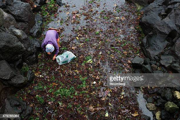 An elderly woman harvests seaweed on the waterfront in Jeju South Korea on Saturday June 27 2015 South Koreaâs 15 trillion won extra budget will...