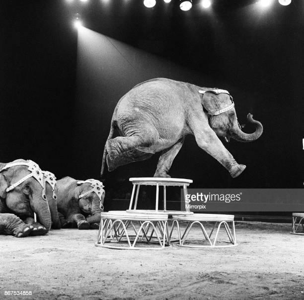 An elephant act at a Bertram Mills Circus performance 19th December 1958