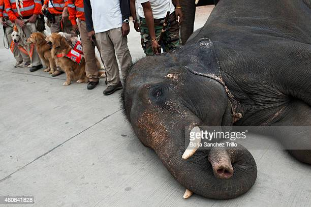 An elephant and dogs from the Thai rescue teams pose before the exhibition on disaster preparedness and response before the Remembrance Ceremony 'Ten...