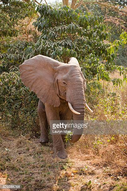 An elephant at Lake Manyara National Park, Tanzania