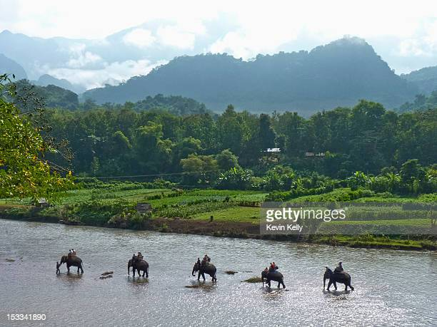 An elephant camp walking in the Mekong River, Luang Prabang, Laos