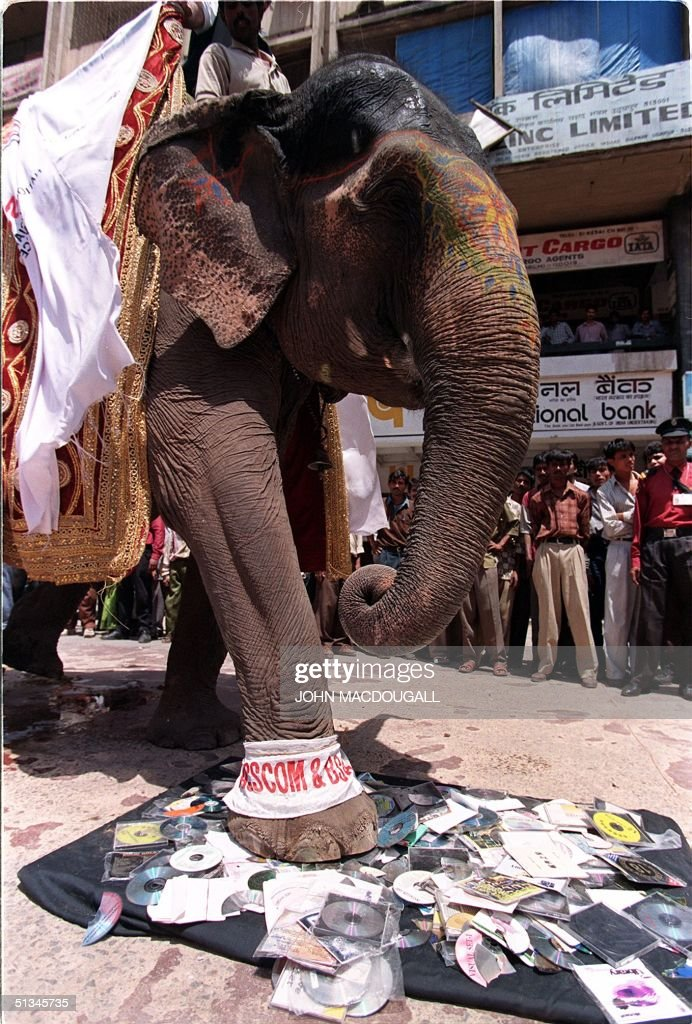 An elephant crushes pirated software CDs seized du : News Photo