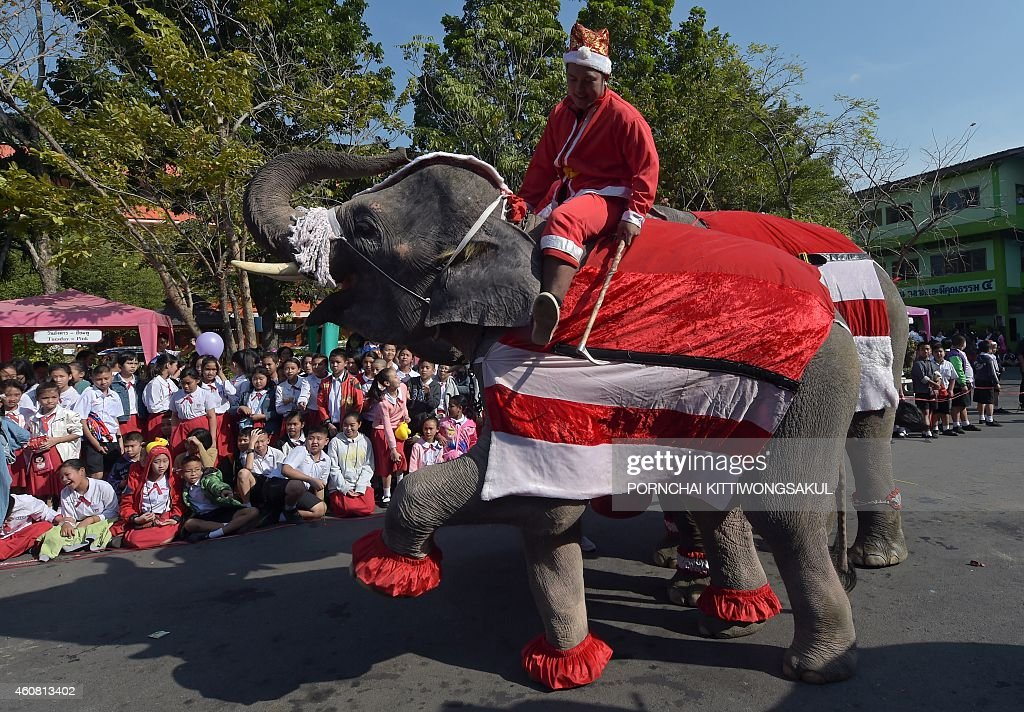 An elephant dressed in a Santa Claus costume performs for students ahead of the Christmas festival at a school in Ayutthaya province on December 24, 2014. The event was held as part of a campaign to promote Christmas in Thailand. AFP PHOTO/Pornchai KITTIWONGSAKUL
