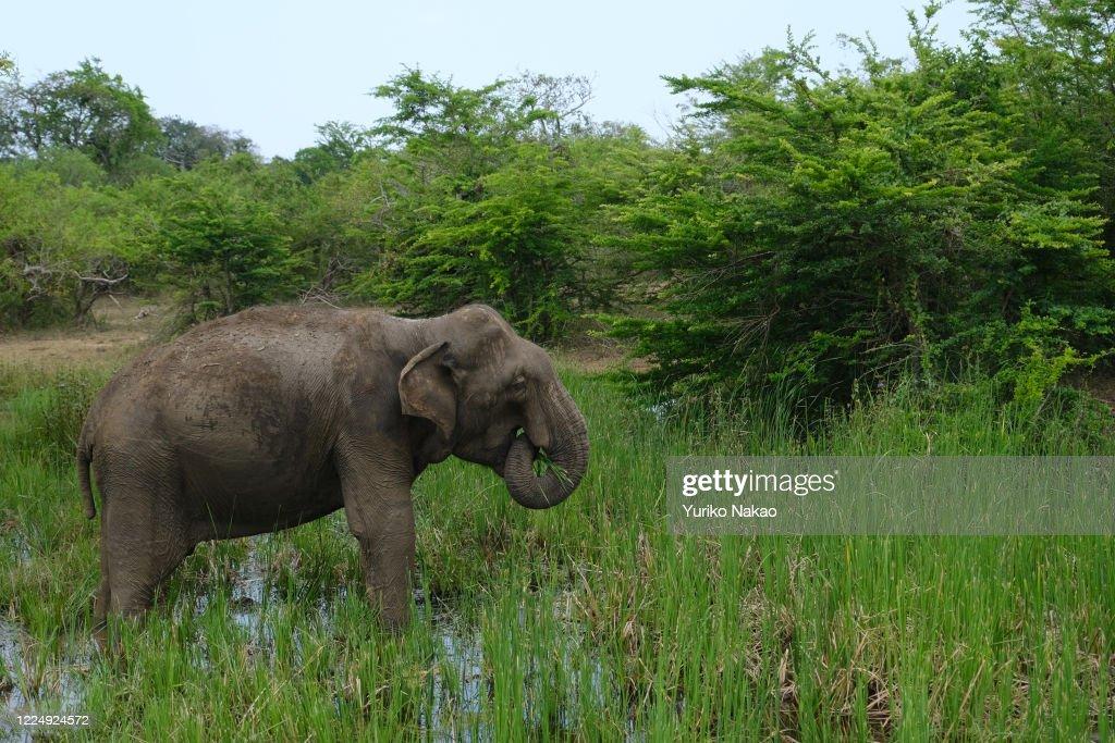 Yala National Park And Kataragama : News Photo