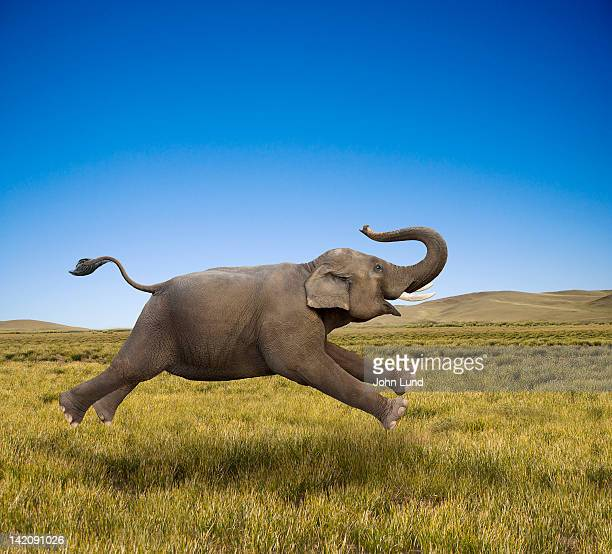an elephant galloping in freedom and joy - elephant stock pictures, royalty-free photos & images