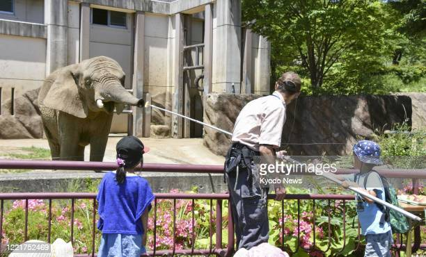 An elephant gets an orange from a visitor at a zoo in Morioka, northeastern Japan, on June 21, 2020.