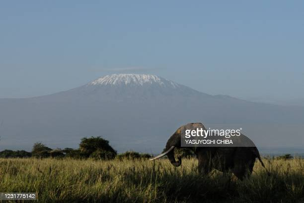 An elephant grazes with a view of Mount Kilimanjaro in the background at Kimana Sanctuary in Kimana, Kenya, on March 3, 2021. - A turf war has...