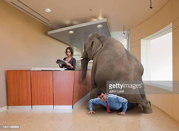 an elephant in the room - glitch art stock-fotos und bilder
