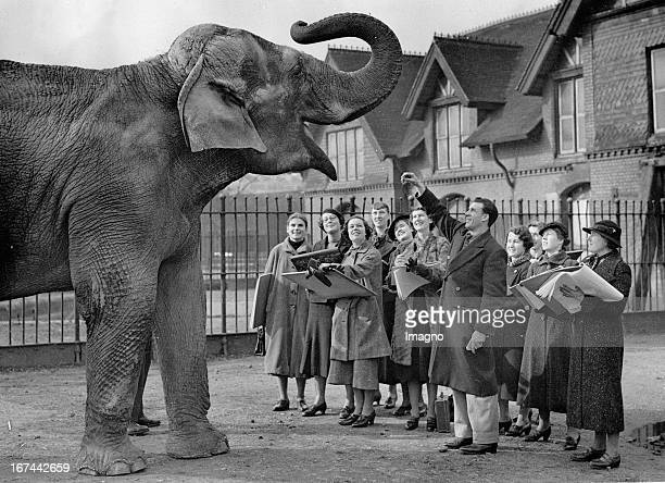 An elephant is drawn by scholars while the animal sculptor James Skeaping feeding the elephant. London Zoo. About 1935. Photograph. Ein Elephant wird...
