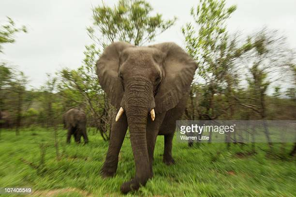 An elephant is pictured in the Kruger National Park in Malelane, South Africa.