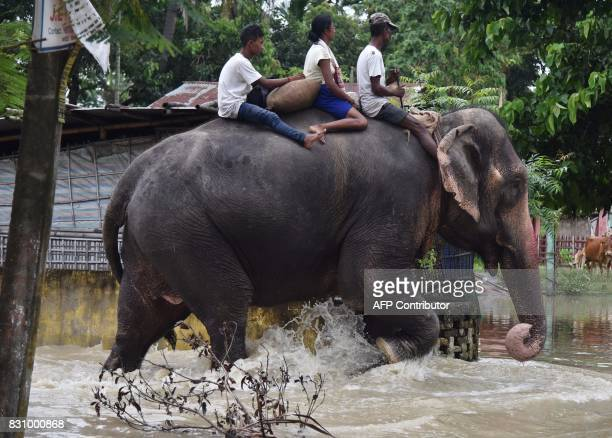 An elephant of the Assam Forest department wades through flood waters in Jakhalabandha area in Koliabor some 186km from Guwahati the capital city of...