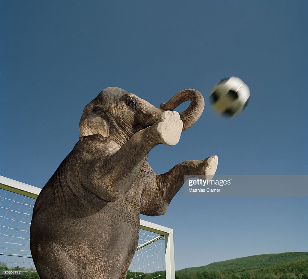 an elephant playing soccer as a goalkeeper