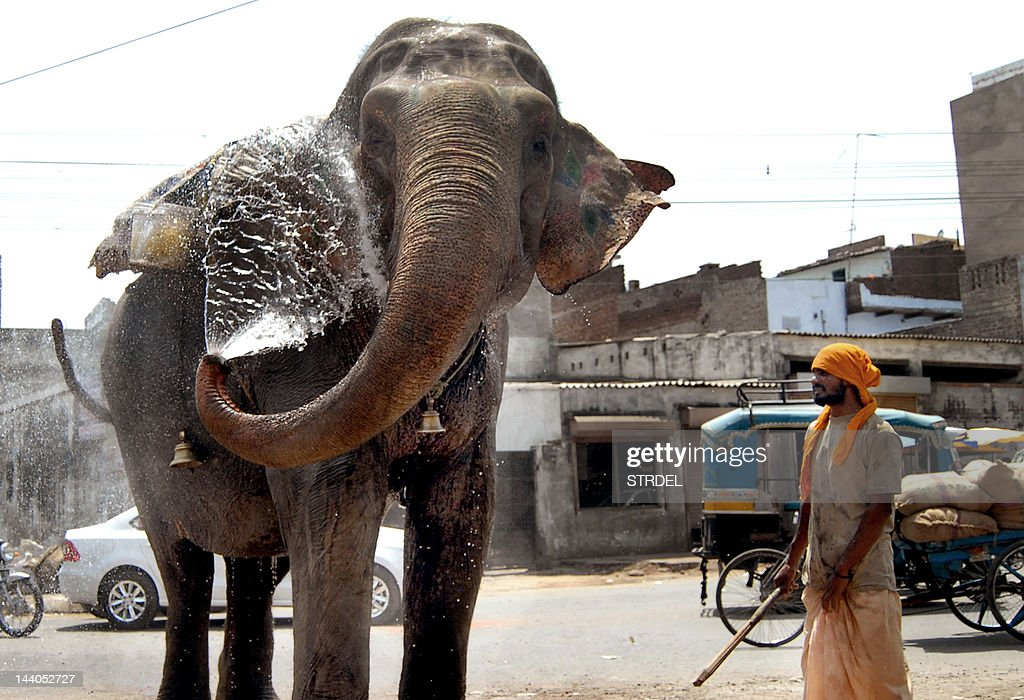 An elephant sprays water from its keeper to stay cool during a heat wave at Jalandhar in Punjab state on May 9 2012 Temperatures reached 40 degrees...