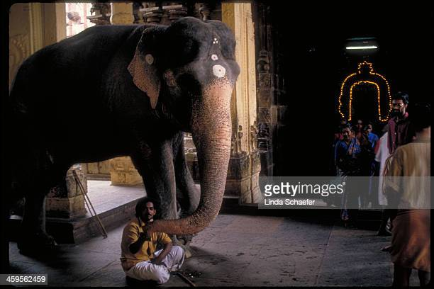 CONTENT] An elephant stands guard with his owner outside a Madurai Hindu temple in Southern India
