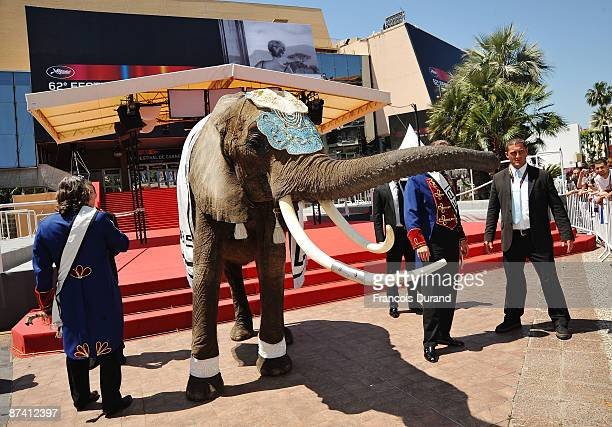 An elephant stops in front of the Palais des Festivals as it walks down the Croisette during the 1835 White Palm Hotel Elephant Parade held on the...