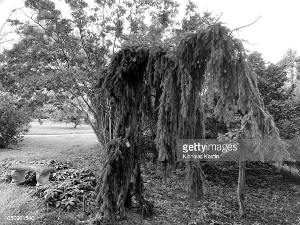 An Elephant Tree