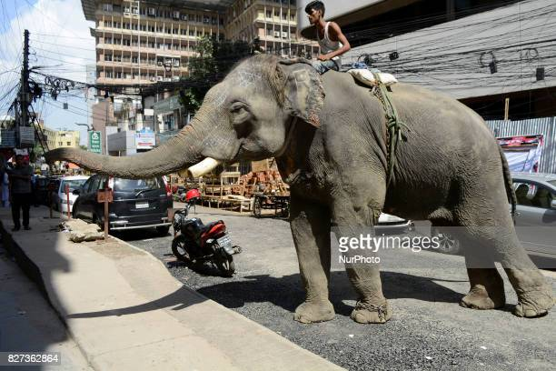 An elephant tries to collect money from passerby in the street of Kawranbazar Dhaka Bangladesh on August 07 2017 Estimates say there are about 200...