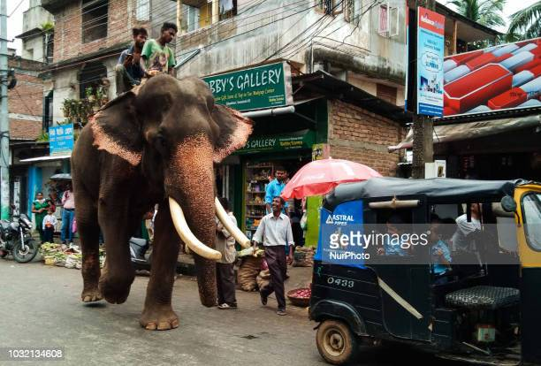 An elephant walking in the street of Guwahati city in Assam India as school kids are smiling in the eve of Ganesh Chaturthi on Wednesday Sept 12 2018