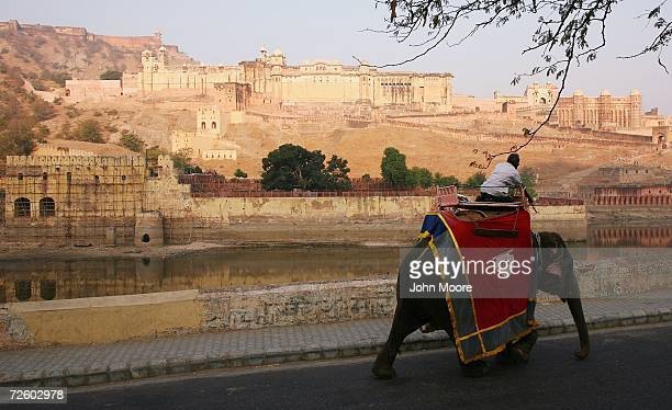 An elephant walks to work to carry tourists up to the 16th century Amber Fort November 19, 2006 outside of Jaipur in the Indian state of Rajasthan....