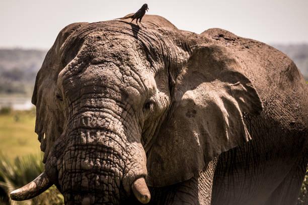 UGA: Wildlife of Uganda