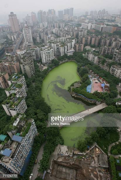 An elevated view of the polluted Nanhu Lake is seen on June 5 2006 in Chongqing Municipality China wher activities plan to mark World Environment Day...