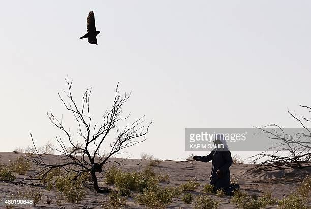 An Emirati falconer moves a lure to attract a falcon during a falconry competition part of the 2014 International Festival of Falconry in Hameem...