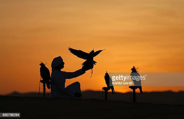 TOPSHOT An Emirati from the Qubaisi tribe trains falcons in the Liwa desert some 250 kilometres west of the Gulf emirate of Abu Dhabi during the Liwa...