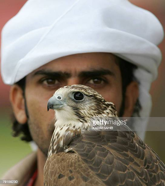 An Emirati man holds a falcon in Abu Dhabi 21 January 2008 The falcon is a mix of the gyr and peregrine species Hunting with trained falcons is a...