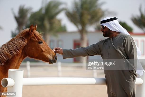 An Emirati man touches a thoroughbred Arab foal at the AlDhafra Equestrian Club in the desert near the city of Madinat Zayed 150 kilometres west of...