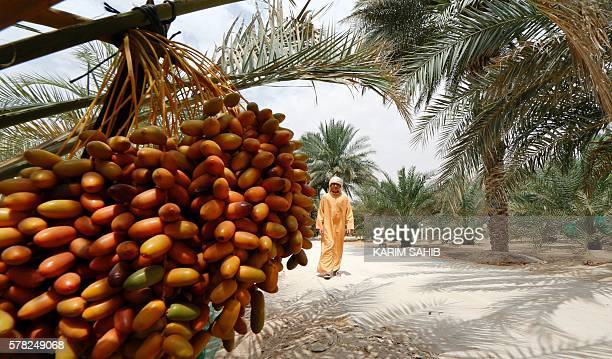 An Emirati man walks past a date palm tree during the annual Liwa Date Festival in the western region of Liwa south of Abu Dhabi on July 21 2016...