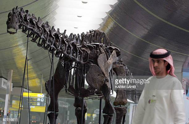 An Emirati man walks past the 140millionyearold dinosaur put on display at Abu Dhabi international airport until October on August 11 2008 The...