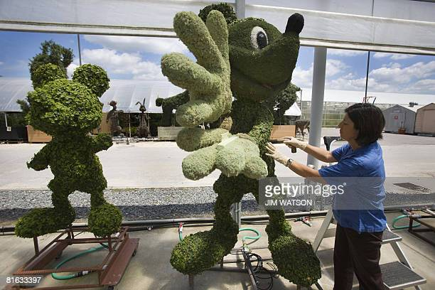 An employee adjusts a topiary in the backstage greenhouse area of Disney World in Orlando Florida April 10 2008 The complex is reportedly the most...